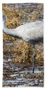 Beautiful Day For A Walk -sandhill Crane   Beach Towel