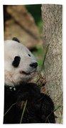 Beautiful Giant Panda Bear In The Wild Beach Towel