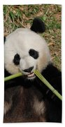 Beautiful Giant Panda Eating Bamboo From The Center Beach Towel