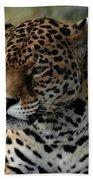 Beautiful Jaguar Portrait Beach Sheet