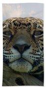 Beautiful Jaguar Beach Towel