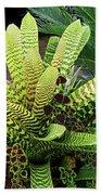 Beautiful Lime Bromeliad Beach Towel