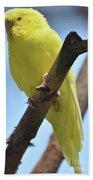 Beautiful Little Yellow Budgie Bird In Nature Beach Towel