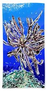 Beautiful Marine Plants 1 Beach Towel