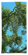 Beautiful Oak Beach Towel