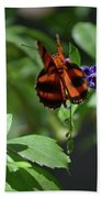 Beautiful Oak Tiger Butterfly On Purple Flowers Beach Towel