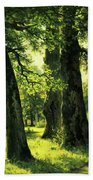 Beautiful Oak Trees Reach To The Skies Beach Towel