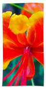 Beautiful Peacock Flower 3 Beach Towel