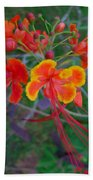Beautiful Peacock Flower 5 Beach Towel