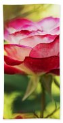 Beautiful Pink Rose Blooming In Garden Beach Towel