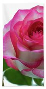 Beautiful Pink Rose With Leaves On A Wite Background. Beach Towel