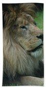 Beautiful Resting Lion In Tall Green Grass Beach Towel
