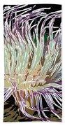 Beautiful Sea Anemone 1 Beach Towel