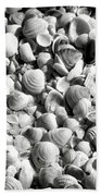 Beautiful Seashells Black And White Beach Towel