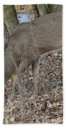 Beautiful Stag Beach Towel