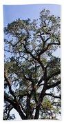 Beautiful Tree Blue Sky Sunshine Beach Towel