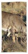 Beautiful Young Deer Beach Sheet