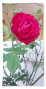 Beauty Of  Red Rose  Beach Towel