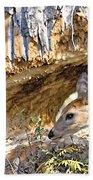 Beaver Wannabe Beach Towel