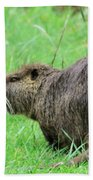 Beaver With Whiskers Beach Towel