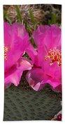 Beavertail Cactus Flowers Beach Towel