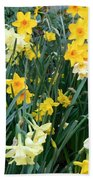 Bed Of Daffodils Beach Towel