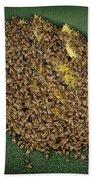Bee Cluster Beach Towel