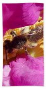 Bee In The Rugosa Beach Towel