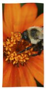 Bee On Aster Beach Towel