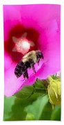 Bee On Edge Of A Hibiscus Flower Beach Towel