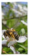 Bee On Flower On Tree Branch Beach Towel