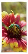 Bee On Gaillardia Beach Towel