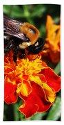 Bee On Marigold Beach Towel by William Selander