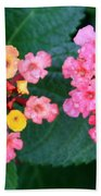 Bee On Rainy Flowers Beach Towel
