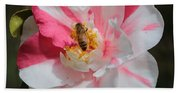 Bee On White And Pink Camellia Beach Towel