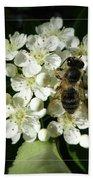 Bee On White Flowers 2 Beach Sheet