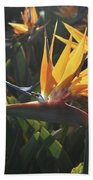 Bee Resting On The Petals Of A Bird Of Paradise  Beach Towel
