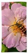 Beetle In A Rose 003 Beach Towel