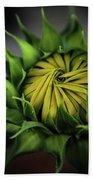 Beginnings Sunflower Xiii Beach Sheet