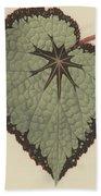 Begonia Rex, Variety Isis Beach Towel