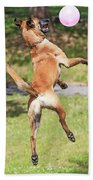 Belgian Shepherd Dog Beach Towel