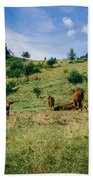 Bells And Cows Beach Towel