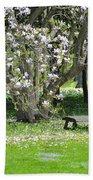 Bench Among Magnolia Beach Towel