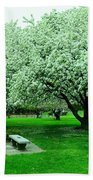 Bench Among.the Blossoms Beach Towel