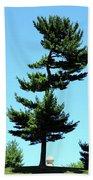 Beneath This Tree Lies Robert Edwin Peary Beach Towel