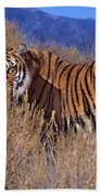 Bengal Tiger Endangered Species Wildlife Rescue Beach Towel
