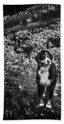 Bernese Mountain Dog Black And White Beach Sheet