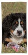 Bernese Mountain Dog Puppy Beach Towel