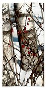 Berries And Birches Beach Towel