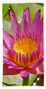 Beyond Beautiful Water Lily 3 Beach Towel